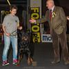 Laura - Esposizione internazionale canina Modena gennaio 2016 - (7)
