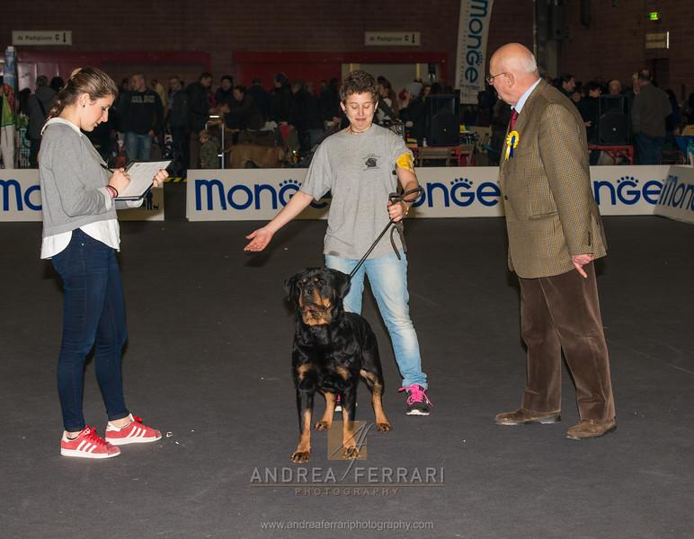 Esposizione internazionale canina Modena gennaio 2016 - (20)