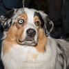 Esposizione internazionale canina Modena febbraio 2015 #18