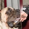 Esposizione internazionale canina Reggio Emilia marzo 2015 #9