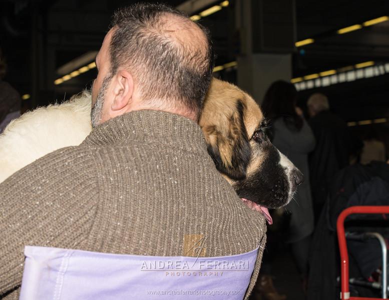 Cucciolone coccolone - Esposizione internazionale canina Modena gennaio 2016 - (23)