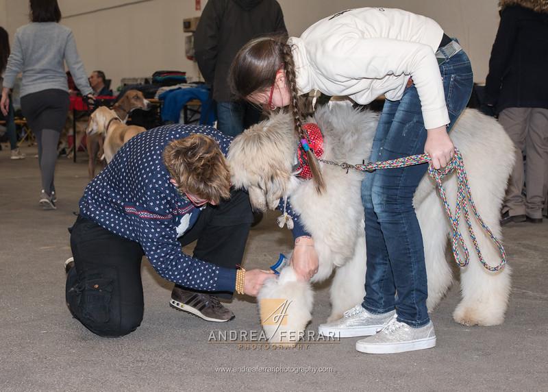 Esposizione internazionale canina Reggio Emilia marzo 2016 (82)