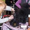 Esposizione internazionale canina Reggio Emilia marzo 2016 (66)