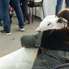 Esposizione internazionale canina Reggio Emilia marzo 2014 #8