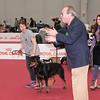 Esposizione internazionale canina Reggio Emilia marzo 2016 (41)