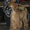 Esposizione internazionale canina Modena gennaio 2016 - (32)