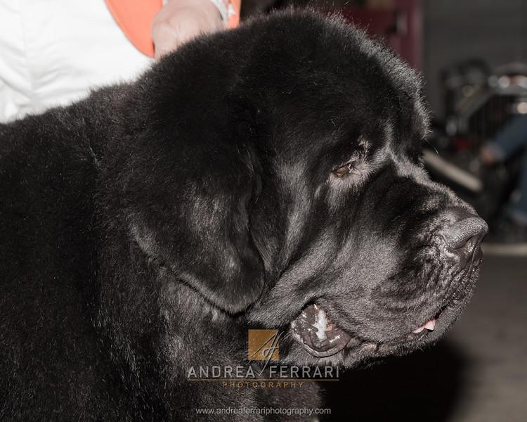 Esposizione internazionale canina Reggio Emilia marzo 2015 #8
