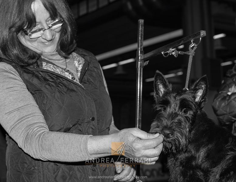 Esposizione internazionale canina Modena gennaio 2016 - (30)