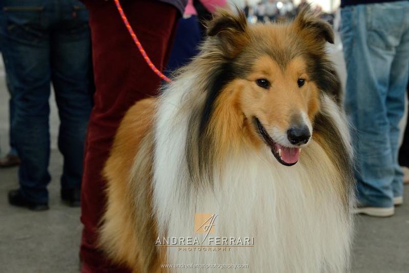 Esposizione internazionale canina Reggio Emilia marzo 2014 #9
