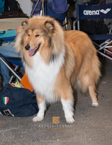 Esposizione internazionale canina Reggio Emilia marzo 2016 (87)