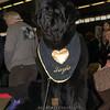 Esposizione internazionale canina Modena gennaio 2016 - (25)