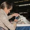 Esposizione internazionale canina Modena gennaio 2016 - (26)