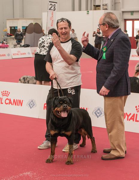 Esposizione internazionale canina Reggio Emilia marzo 2016 (14)