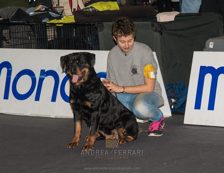 Laura - Esposizione internazionale canina Modena gennaio 2016 - (16)