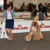 Esposizione internazionale canina Reggio Emilia marzo 2017 (21)