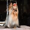 La diva - Esposizione internazionale canina Modena gennaio 2016 - (37)