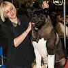 Esposizione internazionale canina Modena gennaio 2016 - (85)