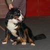 Esposizione internazionale canina Modena gennaio 2016 - (45)
