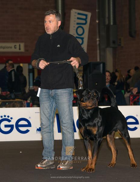 Fabio e Thor - Esposizione internazionale canina Modena gennaio 2016 - (11)