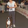 Esposizione internazionale canina Reggio Emilia marzo 2017 (2)