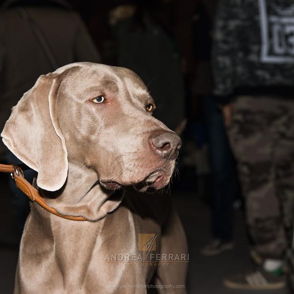 Esposizione internazionale canina Modena febbraio 2015 #2