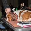 Esposizione internazionale canina Reggio Emilia marzo 2015 #5