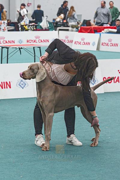 Esposizione internazionale canina Reggio Emilia marzo 2017 (17)