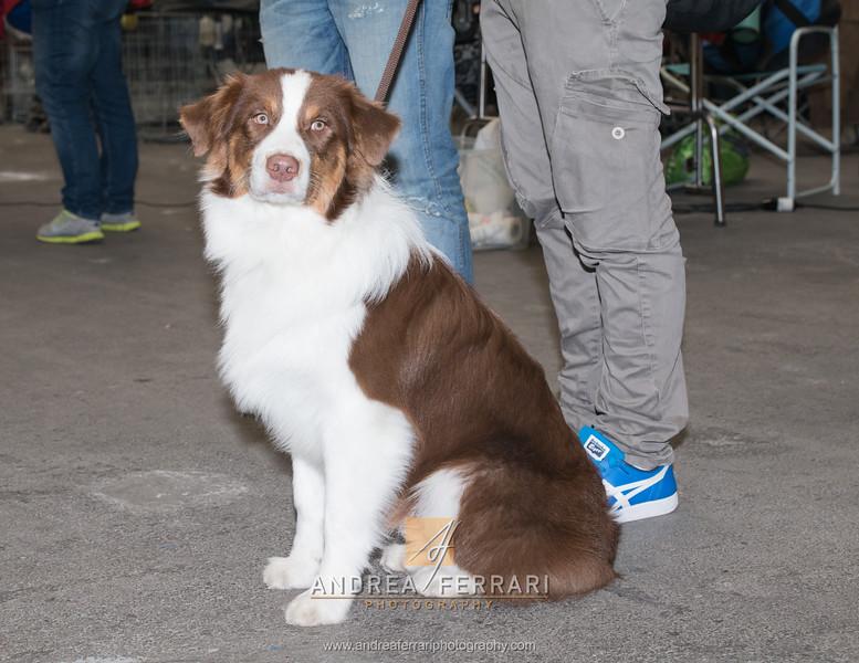 Esposizione internazionale canina Reggio Emilia marzo 2016 (58)