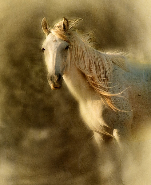Stallion in the Wind