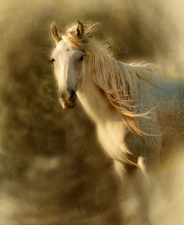 Stallion in the Wind