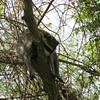 Description - Raccoon <b>Title - Leave Me Alone!</b> <i>- Betsy Stibal</i>