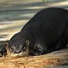 Description - Otter <b>Title - Otter</b> <i>- Ruth Pannunzio</i>