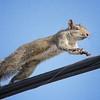 <b>Title - Squirrel</b> <i>- Herbert Zaifert</i>