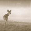 <b>Title - Deer</b> <i>- Joe Dell</i>