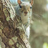 <b>Title - Squirrel</b> <i>- Steve Schwartz</i>