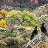 Grand Canyon_November 23, 2013_040-Edit