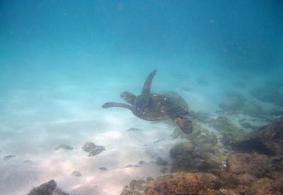 turtle IMG_0086