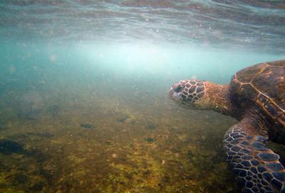 turtle EPV90084