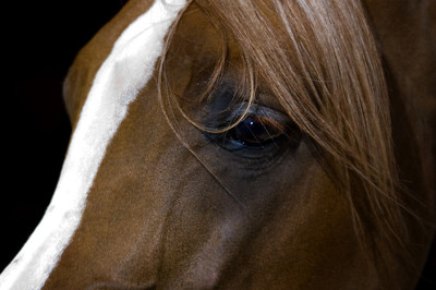 Up close to a beautiful Arabian   Photographs taken at the Annual Scottsdale Arabian Horse Show which is held at Westworld