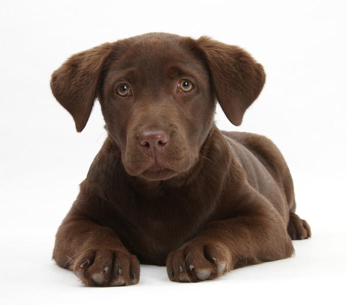 BT Dogs Nr. 42-53043995