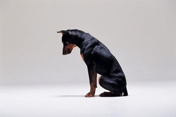 BT Dogs Nr. 42-51947363