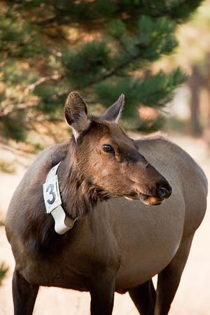 I'm elk #3.