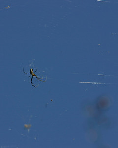 Spider, Everglades, October 2006
