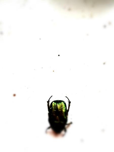 BT Insekt Nr.  BT Insekten