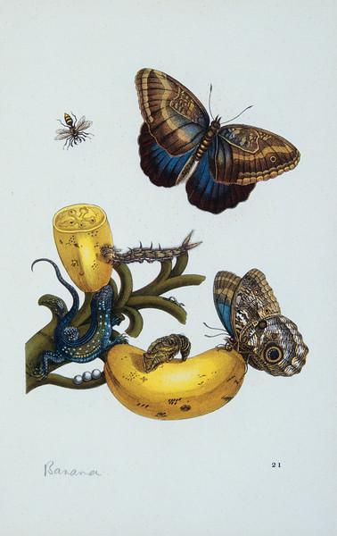 BT Insekt Nr.  BT Insekten HU024983