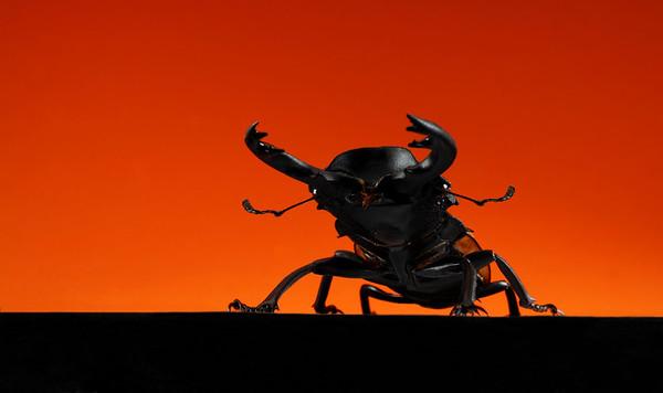 BT Insekt Nr.  BT Insekten 42-21020106
