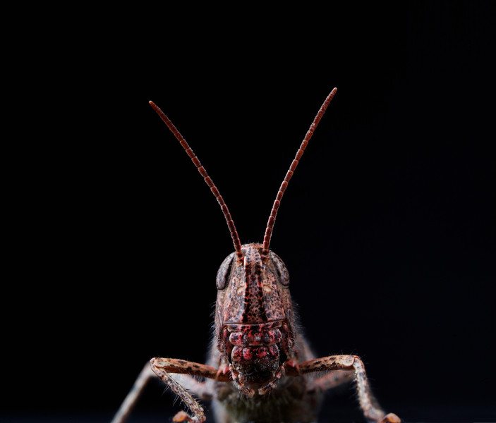 BT Insekt Nr.  BT Insekten 42-20913107