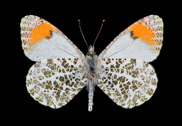 BT Insekt Nr.  BT Insekten 42-24866870