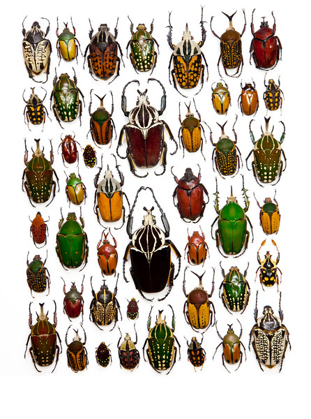 BT Insekt Nr.  BT Insekten 42-32948546
