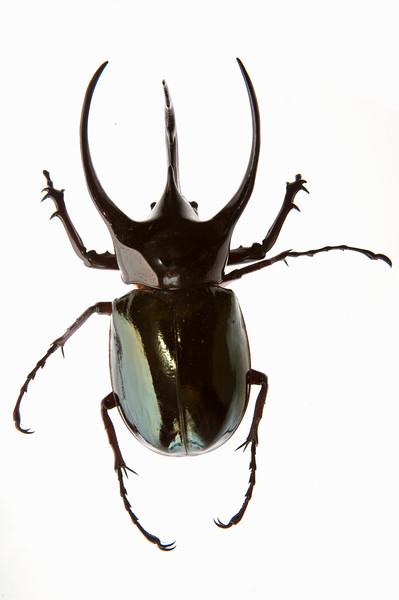 BT Insekt Nr.  BT Insekten 42-49807340
